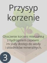 przysyp-2